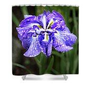 Bellevue Botanical Garden Iris 6402 Shower Curtain