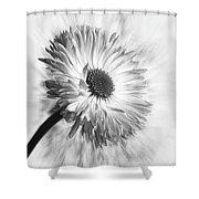 Bellis In Mono  #flower #flowers Shower Curtain
