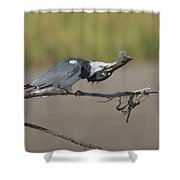 Belted Fish Shower Curtain