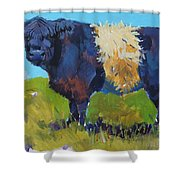 Belted Galloway Cow - The Blue Beltie Shower Curtain