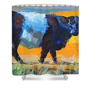 Belted Galloway Cow Side View Shower Curtain