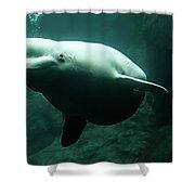 Beluga Whale 1 Shower Curtain