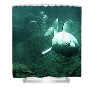 Beluga Whale 2 Shower Curtain