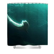 Beluga Whale 4 Shower Curtain