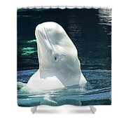 Beluga Whale Shower Curtain
