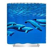 Beluga Whale Pod Shower Curtain