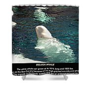 Beluga Whale Poster Shower Curtain