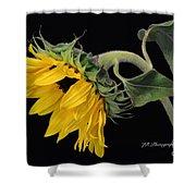 Bending Sunflower Shower Curtain
