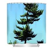 Beneath This Tree Lies Robert Edwin Peary Shower Curtain