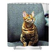 Bengal Cat Oil Pastel  Shower Curtain