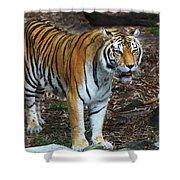 Bengal Tiger Shower Curtain