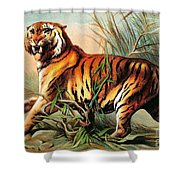 Bengal Tiger, Endangered Species Shower Curtain