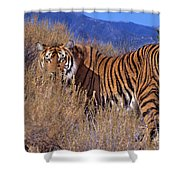 Bengal Tiger Endangered Species Wildlife Rescue Shower Curtain