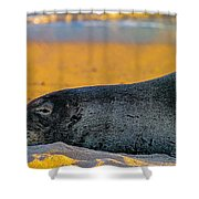 Benny At Sunset Shower Curtain