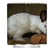 Benny Bunny Shower Curtain