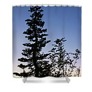 Bent Conifer Shower Curtain