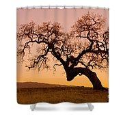 Bent Oak Shower Curtain