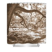 Bent Tree Shower Curtain