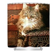 Beo Woof Posed Shower Curtain