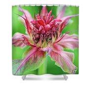 Bergamot Flower Shower Curtain