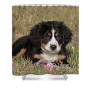 Bernese Mountain Dog Puppy Shower Curtain