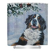 Bernese Mountain Dog With Cardinal Shower Curtain