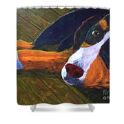 Bernese Mtn Dog On The Deck Shower Curtain