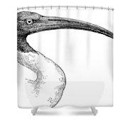 Berniers Ibis Shower Curtain