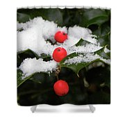 Berries In Snow Shower Curtain