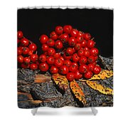 Berries And Bark Shower Curtain