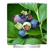 Berries Beautiful Shower Curtain