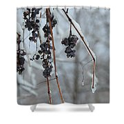 Berries Of Blue Shower Curtain