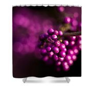 Berries Still Life Shower Curtain