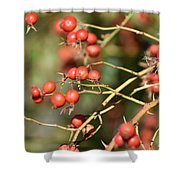 Berry Christmas  Shower Curtain