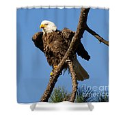 Berry Eagle Shower Curtain