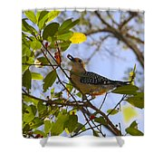 Berry Good Woodpecker Shower Curtain
