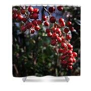 Berry Tree Shower Curtain