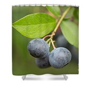 Berrydelicious Shower Curtain