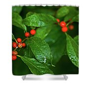 Berry's Shower Curtain