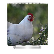 Bertha In The Flowers Shower Curtain