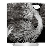 Best Feathers Ever Shower Curtain