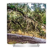 Bethany Cemetery Oaks And Tidal Creek Shower Curtain