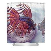 Betta Fish Shower Curtain