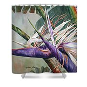 Betty's Bird - Bird Of Paradise Shower Curtain