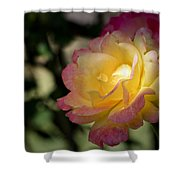 Bettys Rose Shower Curtain
