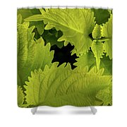 Between The Leaves Shower Curtain