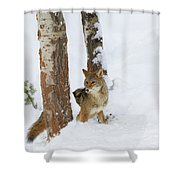 Between The Trees Shower Curtain