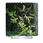 Beverly Hills Deer Shower Curtain