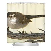 Bewick's Wren Shower Curtain