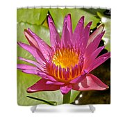 Beyond Beautiful Water Lily 3 Shower Curtain